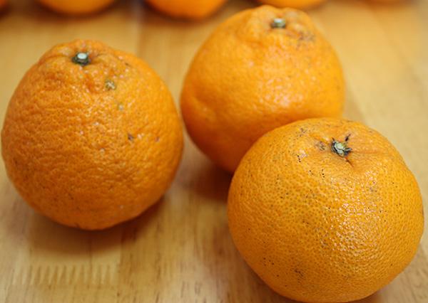 愛媛産地直送低農薬栽培デコポン