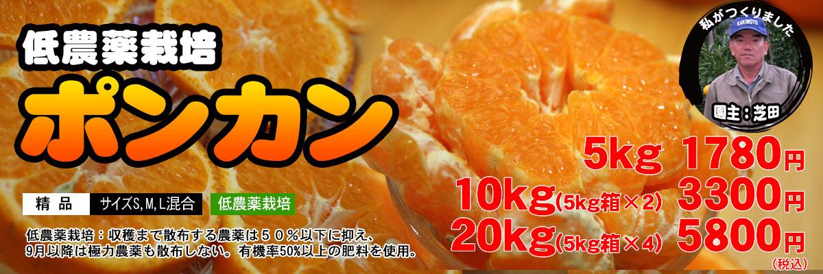 低農薬栽培ポンカン(精品)